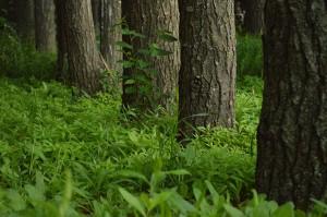 Eikenhout woodstock